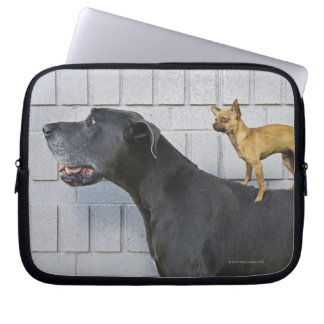 Chihuahua on Great Dane's back Laptop Computer Sleeve