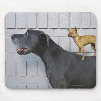 Chihuahua on Great Dane's back Mouse Mat