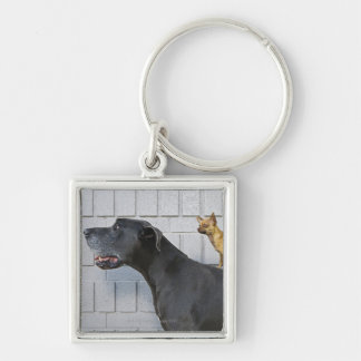 Chihuahua on Great Dane's back Silver-Colored Square Key Ring