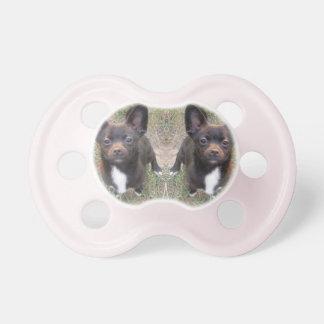 Chihuahua Pacifier