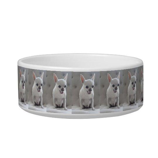 Chihuahua Pet Bowl Add Photo