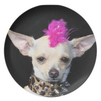 Chihuahua punk rocker plate