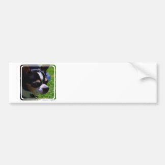 Chihuahua Pup Bumper Sticker Car Bumper Sticker