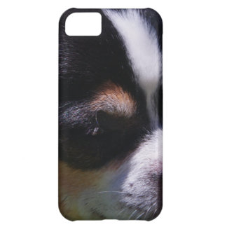 Chihuahua Pup iPhone 5C Case