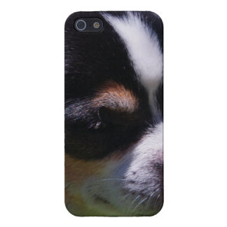 Chihuahua Pup iPhone 5 Cases