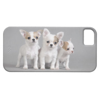 Chihuahua puppies case for the iPhone 5
