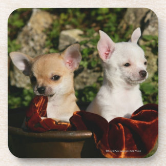 Chihuahua Puppies Drink Coaster
