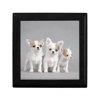 Chihuahua puppies gift box