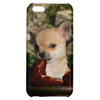 Chihuahua Puppies iPhone 5C Cover
