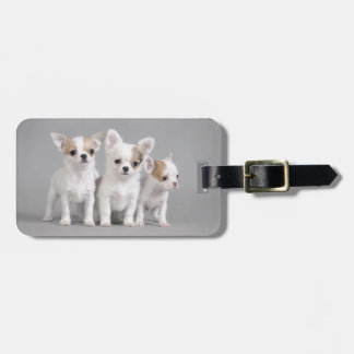 Chihuahua puppies luggage tag