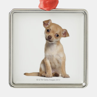 Chihuahua puppy (2 months old) christmas ornament
