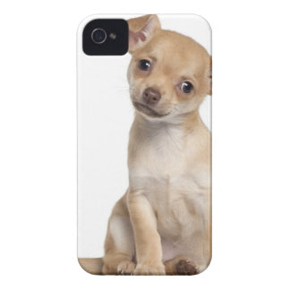 Chihuahua puppy (2 months old) iPhone 4 Case-Mate case