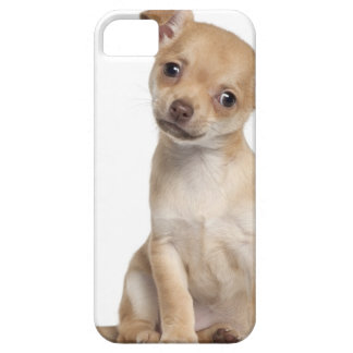 Chihuahua puppy (2 months old) iPhone 5 cover