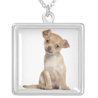 Chihuahua puppy (2 months old) silver plated necklace