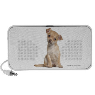 Chihuahua puppy 2 months old portable speaker