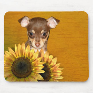 Chihuahua puppy and sunflowers mouse mat