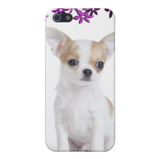 Chihuahua puppy case for the iPhone 5