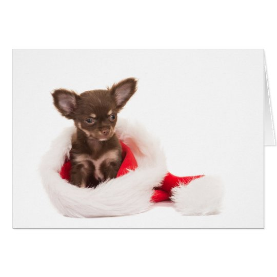 chihuahua puppy christmas card