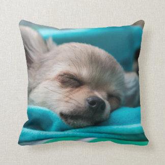 Chihuahua Puppy Cushion