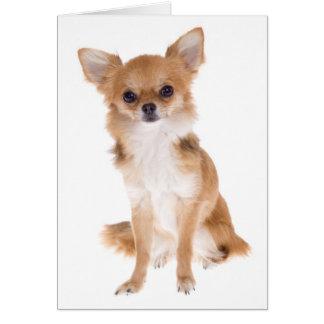 Chihuahua Puppy Dog Blank Notecard