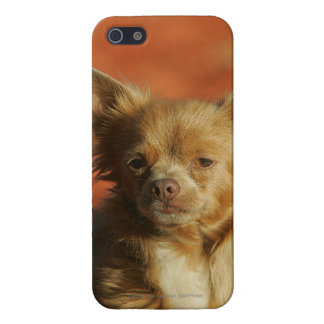 Chihuahua Puppy Headshot Cover For iPhone 5/5S