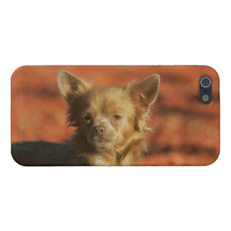 Chihuahua Puppy Headshot iPhone 5/5S Cover