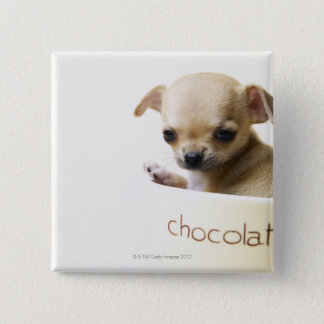 Chihuahua puppy in bowl (cropped) 15 cm square badge