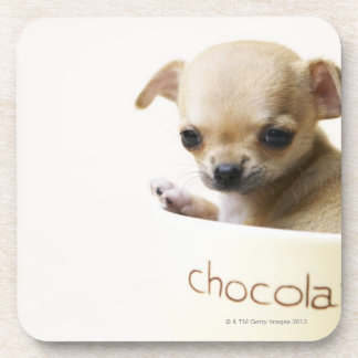 Chihuahua puppy in bowl (cropped) drink coaster