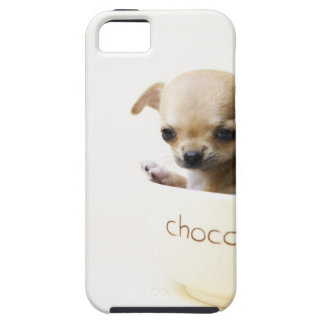 Chihuahua puppy in bowl (cropped) iPhone 5 covers