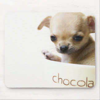 Chihuahua puppy in bowl (cropped) mouse pad