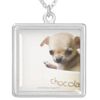 Chihuahua puppy in bowl (cropped) silver plated necklace