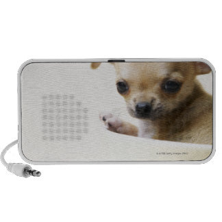 Chihuahua puppy in bowl (cropped) mini speaker