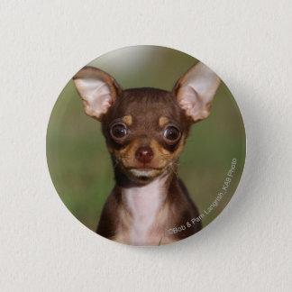 Chihuahua Puppy Looking at Camera 6 Cm Round Badge