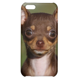 Chihuahua Puppy Looking at Camera Case For iPhone 5C