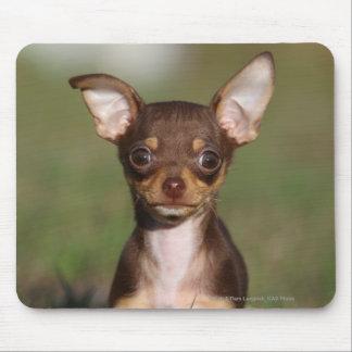 Chihuahua Puppy Looking at Camera Mouse Mat