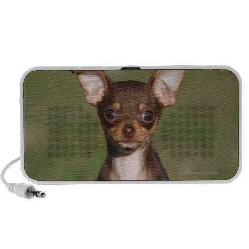 Chihuahua Puppy Looking at Camera Mini Speaker