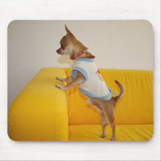 Chihuahua Puppy On Yellow Sofa Mouse Pad