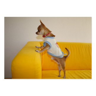 Chihuahua Puppy On Yellow Sofa Pack Of Chubby Business Cards