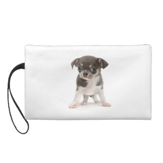 Chihuahua puppy standing of white background wristlet