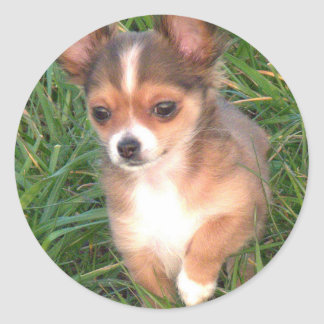 Chihuahua puppy round sticker