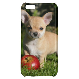 Chihuahua Puppy with Apples iPhone 5C Case