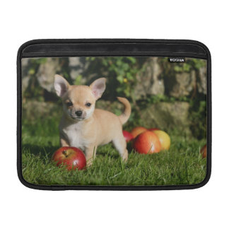 Chihuahua Puppy with Apples MacBook Sleeve
