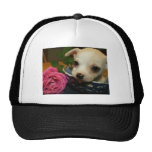 Chihuahua rose flower love hat