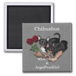 Chihuahua Roses Magnet 2 Inch Square Magnet