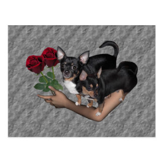 Chihuahua Roses Postcard