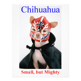Chihuahua Small But Mighty Breed 21.5 Cm X 28 Cm Flyer