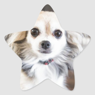 Chihuahua Star Sticker
