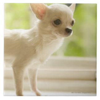 Chihuahua Tile