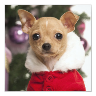 Chihuahua Wearing A Christmas Suit Card
