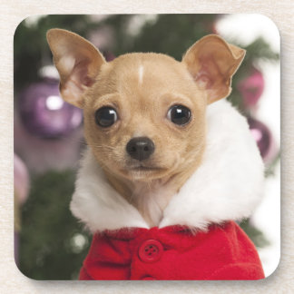 Chihuahua Wearing A Christmas Suit Coaster